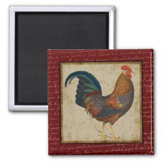 Gallo rojo imán cuadrado