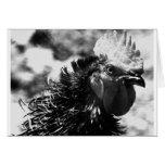 gallo tarjetón