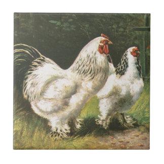 Gallo y gallina azulejo cuadrado pequeño