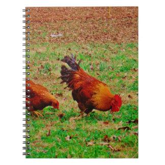 Gallo y gallina libreta