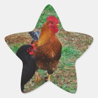 Gallo y gallina negra pegatina en forma de estrella