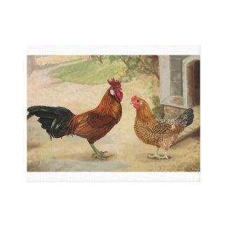 Gallo y gallina sicilianos del ranúnculo en corral lienzo envuelto para galerias