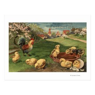 Gallo y polluelos tarjetas postales