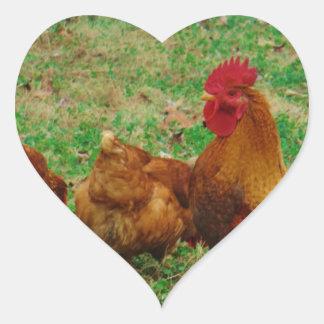 Gallo y sus pollos pegatina en forma de corazón