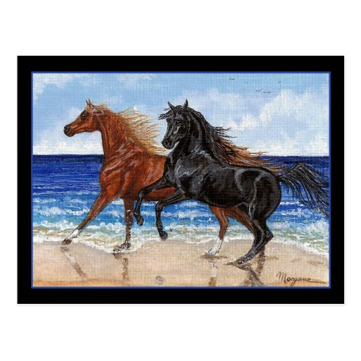 Gallop beach Arabian horse postcard