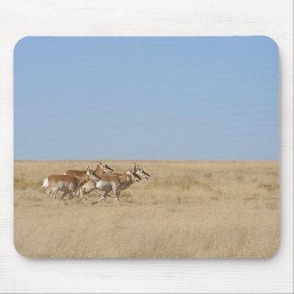 Galloping Antelope Mouse Pad