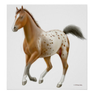 Galloping Appaloosa Horse Print