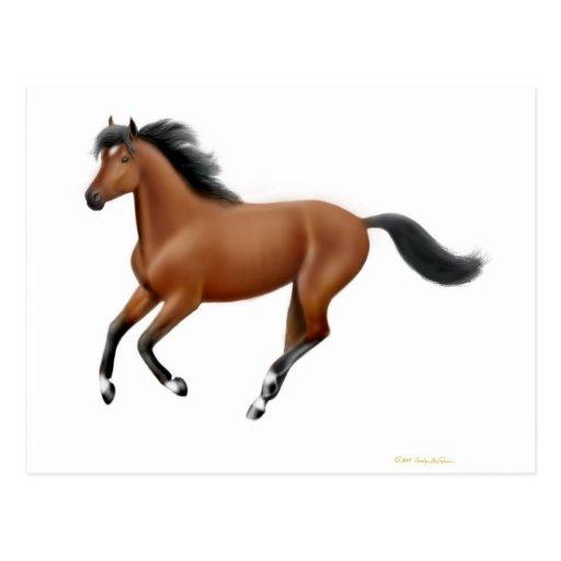 Galloping Bay Horse Postcard
