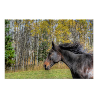 Galloping Black Horse, Horse-lover Equine Photo Poster