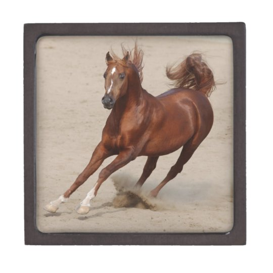 Galloping Brown Chestnut Horse Kicks Up Sand Gift Box