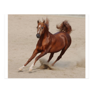 Galloping Brown Chestnut Horse Kicks Up Sand Postcard