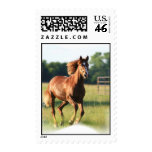 Galloping Chestnut Horse Stamp
