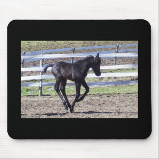 Galloping Colt Mousepad