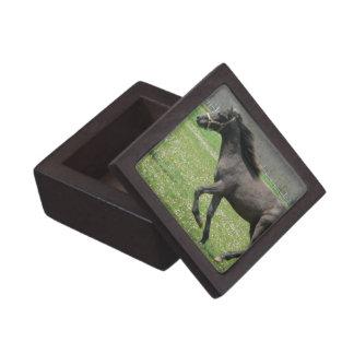 Galloping Colt Premium Gift Box