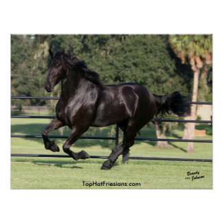 Galloping Friesian Beauty Poster