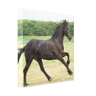 Galloping Friesian Canvas Print