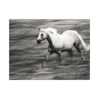 Galloping Horse Gallery Wrapped Canvas