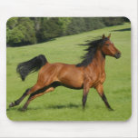 Galloping Horse Mousepad Mouse Pads