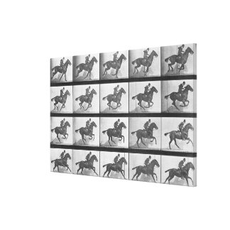 Galloping Horse, plate 628 from 'Animal Locomotion Gallery Wrapped Canvas