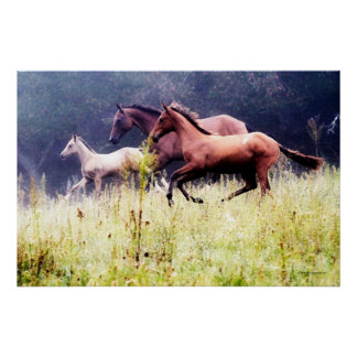Galloping Horses Photography Poster