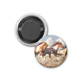 Galloping Mustangs Magnet