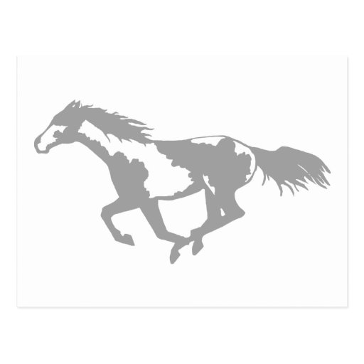 Galloping Paint Horse Post Card