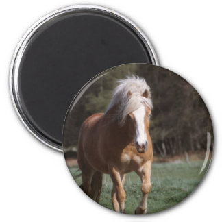 Galloping Palomino  Magnet Magnets