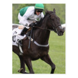 Galloping Race Horse Postcard
