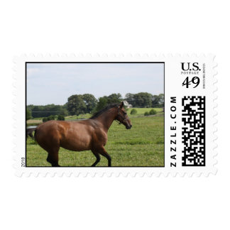 Galloping Thoroughbred  Postage Stamp