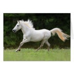 Galloping White Horse Cards