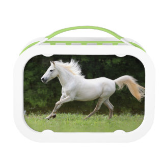 Galloping White Horse Lunch Box