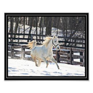 Galloping White Horse Photo Print