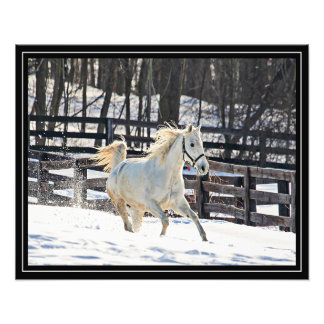 Galloping White Horse Photograph