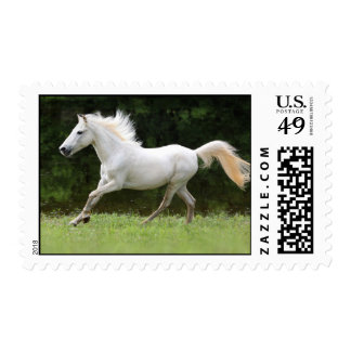 Galloping White Horse Postage Stamp