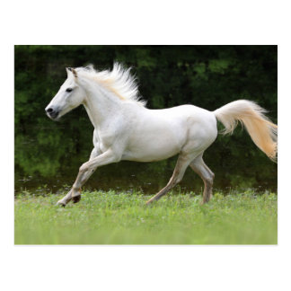 Galloping White Horse Postcard