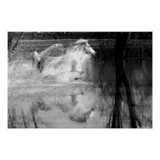 Galloping White Water Horse Poster