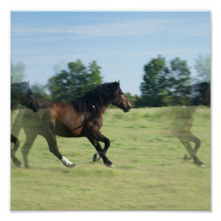 Galloping Wild Mustang Print