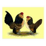 Gallos belgas de los d'Anvers:  Codornices Postal