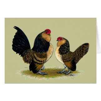 Gallos belgas de los d'Anvers:  Codornices Tarjeta Pequeña