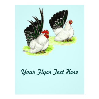 "Gallos blancos negros japoneses folleto 8.5"" x 11"""