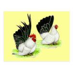 Gallos blancos negros japoneses postal