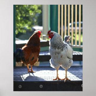 """""""Gallos del patio """" Impresiones"""