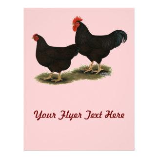 """Gallos del rojo de Rhode Island Folleto 8.5"""" X 11"""""""