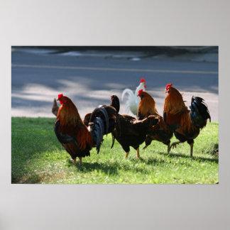 Gallos en un paseo poster