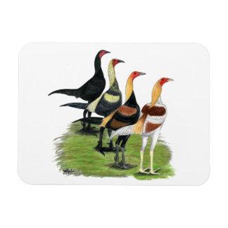 Gallos modernos del juego rectangle magnet