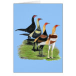 Gallos modernos del juego tarjetas