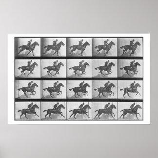 Galopando el caballo platee 628 de la locomoción posters