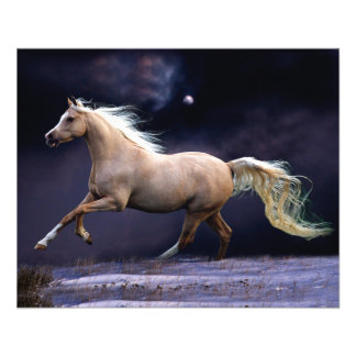"""galope del caballo folleto 4.5"""" x 5.6"""""""