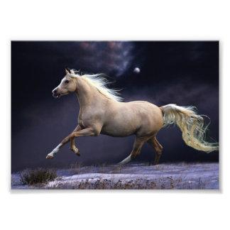 galope del caballo fotografía