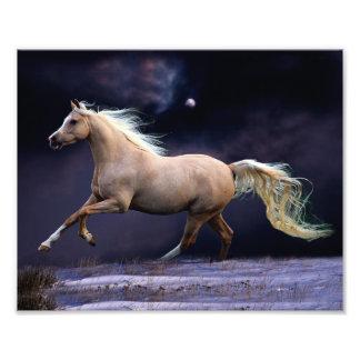 galope del caballo fotografías